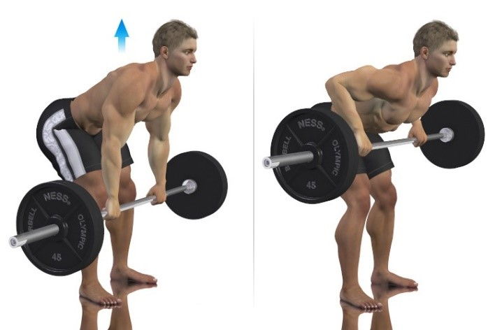Bent over barbell row back exercise